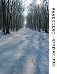 pathway in the forest with... | Shutterstock . vector #581521996