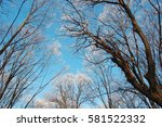 forest with frozen trees | Shutterstock . vector #581522332