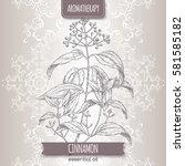 cinnamomum verum aka cinnamon... | Shutterstock .eps vector #581585182