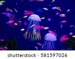 underwater world fish aquarium | Shutterstock . vector #581597026