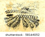 vineyard | Shutterstock .eps vector #58164052
