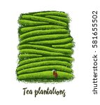 illustration of tea plantations. | Shutterstock .eps vector #581655502