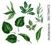 green leaves isolated. leaves... | Shutterstock . vector #581704972