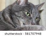 cat cleaning leg | Shutterstock . vector #581707948