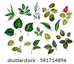 Stock photo watercolor leaves collection of different leaves rose linden blackberry eucalyptus hazelnut 581714896