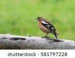 birds and animals in wildlife.... | Shutterstock . vector #581797228