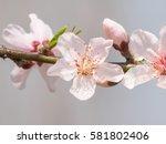 Spring Flowers Series  Macro O...
