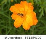 Close Up Of Yellow  Orange...