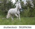 Arabian Horse Running Gallop I...