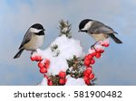 Two Winter Black  Capped...