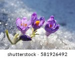 the snowdrops. first spring... | Shutterstock . vector #581926492
