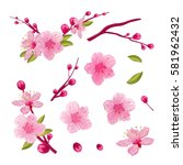 set of cherry blossom  leaves ... | Shutterstock .eps vector #581962432