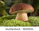 Brown Cap Mushroom On Moss...