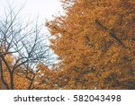 japan tree | Shutterstock . vector #582043498