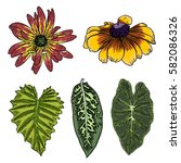 leaf set. exotic and domestic... | Shutterstock .eps vector #582086326