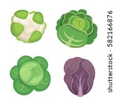 set vector cabbage and lettuce. ...   Shutterstock .eps vector #582166876