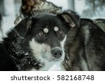husky   high contrast | Shutterstock . vector #582168748