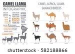 camel  llama  guanaco  alpaca ...   Shutterstock .eps vector #582188866