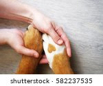 Stock photo dog paws with a spot in the form of heart and human hand close up top view conceptual image of 582237535