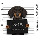 dachshund sausage dog holding a ... | Shutterstock . vector #582238072