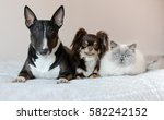 Stock photo two dogs and a cat posing together indoors 582242152
