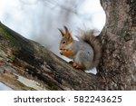 animals in wildlife. amazing... | Shutterstock . vector #582243625