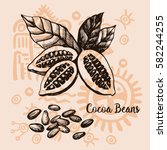 graphic image cocoa beans... | Shutterstock .eps vector #582244255