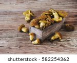 Wild Forest Mushrooms In A...