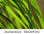 the green leaf backgrounds   Shutterstock . vector #582339142