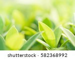 closeup nature view of green... | Shutterstock . vector #582368992