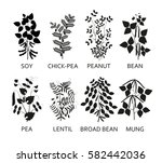silhouettes of legumes plants... | Shutterstock .eps vector #582442036