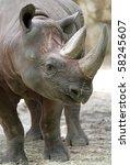 African Black Rhino Profile...