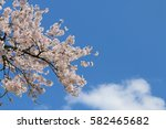cherry blossoms blooming in... | Shutterstock . vector #582465682