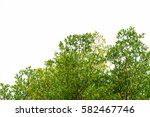 green leaves isolated on white... | Shutterstock . vector #582467746