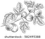 Fig Graphic Tree Black White...