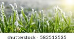 ice crystals on green grass... | Shutterstock . vector #582513535
