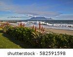 A Beautiful Beachfront Aloe...