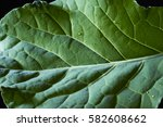 isolated cabbage leaf | Shutterstock . vector #582608662