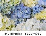 beautiful blue flowers... | Shutterstock . vector #582674962