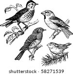birds | Shutterstock .eps vector #58271539