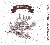 rosemary. herb and spice label. ... | Shutterstock .eps vector #582732436