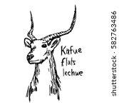 Kafue Flats Lechwe   Vector...
