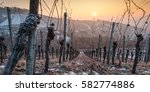 old vine in sunset with ice and ... | Shutterstock . vector #582774886