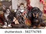 Stock photo dachshund dog and kittens in the autumn background with red leaves 582776785