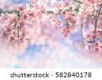 cherry blossom trees  nature... | Shutterstock . vector #582840178