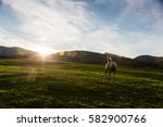 view of a horse on a meadow in... | Shutterstock . vector #582900766