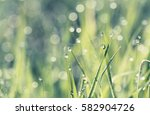 lush green grass in the morning ... | Shutterstock . vector #582904726