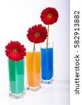 flowers in a vase | Shutterstock . vector #582913882