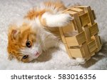 Stock photo cute redhead scottish cat playing with a basket 583016356