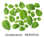 mint isolated on white | Shutterstock . vector #58305316